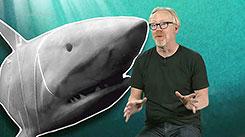 Неделя акул 2012